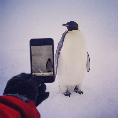 Ends of the earth: a penguin at the Dumont d'Urville research station in Antarctica